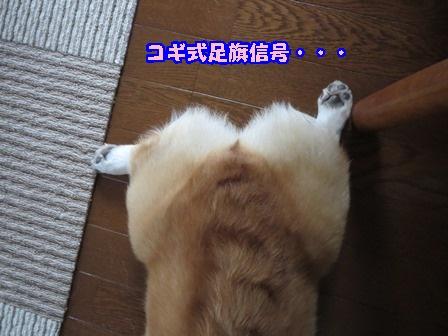 0510甘ったれ1