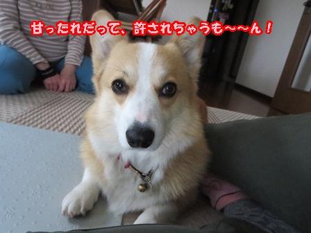 0510甘ったれ9