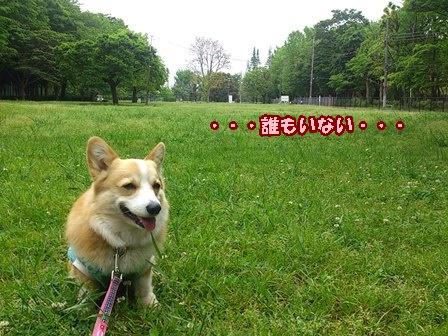 0517公園2