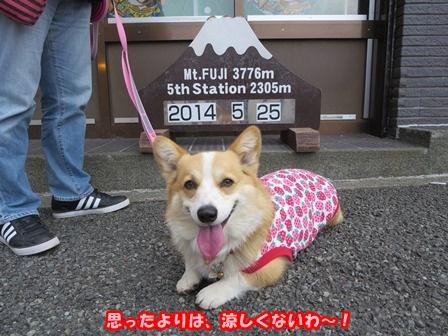 0604富士山3