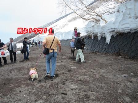 0604富士山5