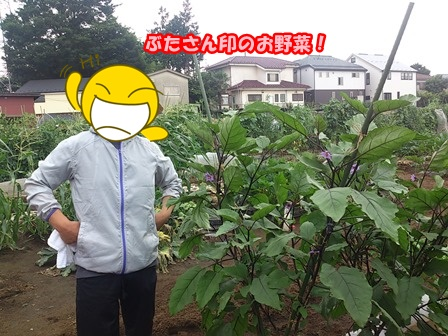 0731お野菜5