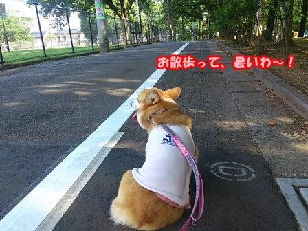 0802お散歩1