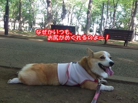 0802お散歩3