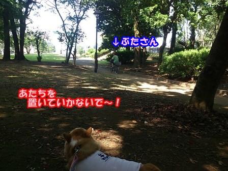 0802お散歩4