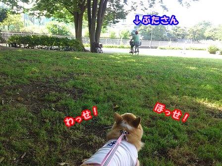 0802お散歩5