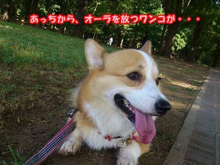 0802お散歩6