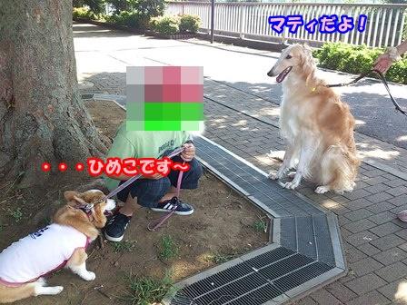 0802お散歩7