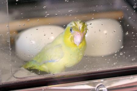 水浴びしたった。