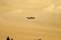 Hyakuri AB_F-15J_261