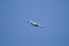 Hyakuri AB_F-4EJ_264