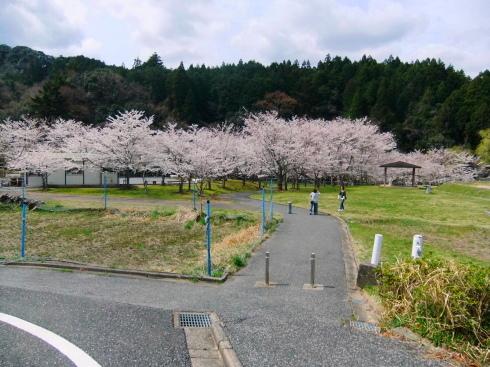 H26.亀山湖花見-10