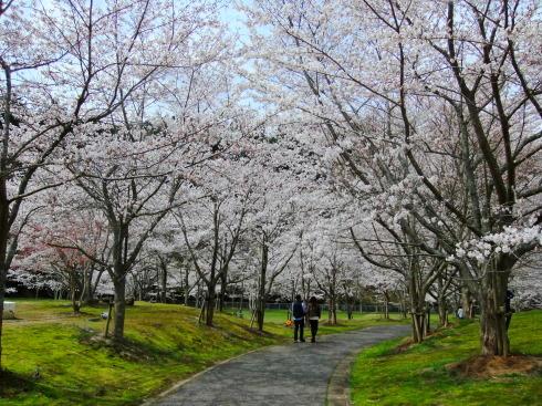 H26.亀山湖花見-11