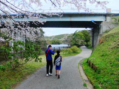 H26.亀山湖花見-13