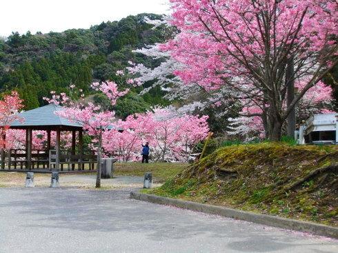 H26.亀山湖花見-17