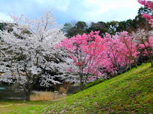 H26.亀山湖花見-18