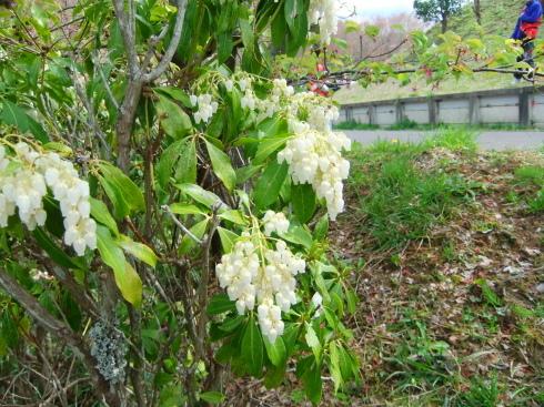 H26.亀山湖花見-25
