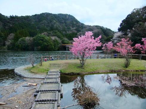 H26.亀山湖花見-27