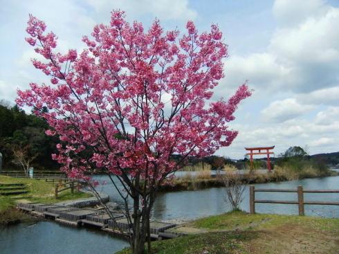 H26.亀山湖花見-28