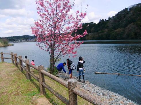 H26.亀山湖花見-29