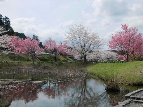 H26.亀山湖花見-31