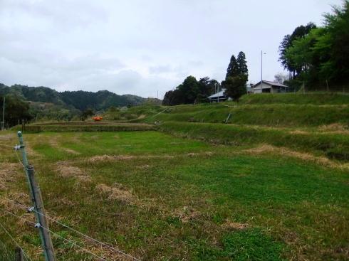 H26.大塚山(4)-17