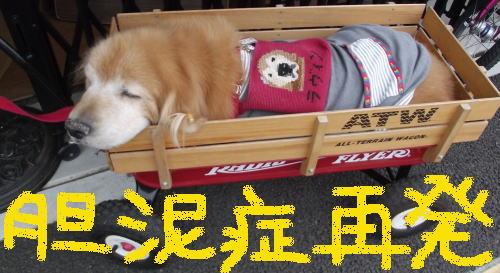 胆泥症でもセラピー犬①