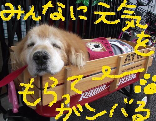 胆泥症でもセラピー犬②