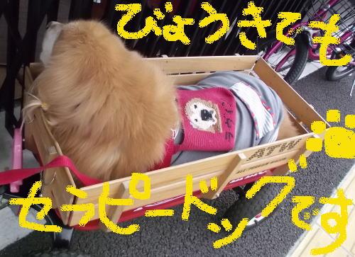 胆泥症でもセラピー犬③