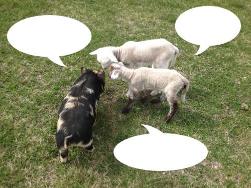 羊の国のラブラドール絵日記シニア!!「チャリティー・カレンダー」1