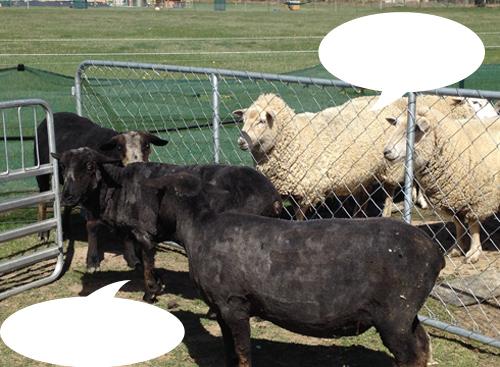 羊の国のラブラドール絵日記シニア!!「チャリティー・カレンダー」4