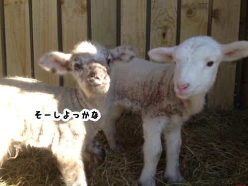 羊の国のラブラドール絵日記シニア!!「One in a million」2