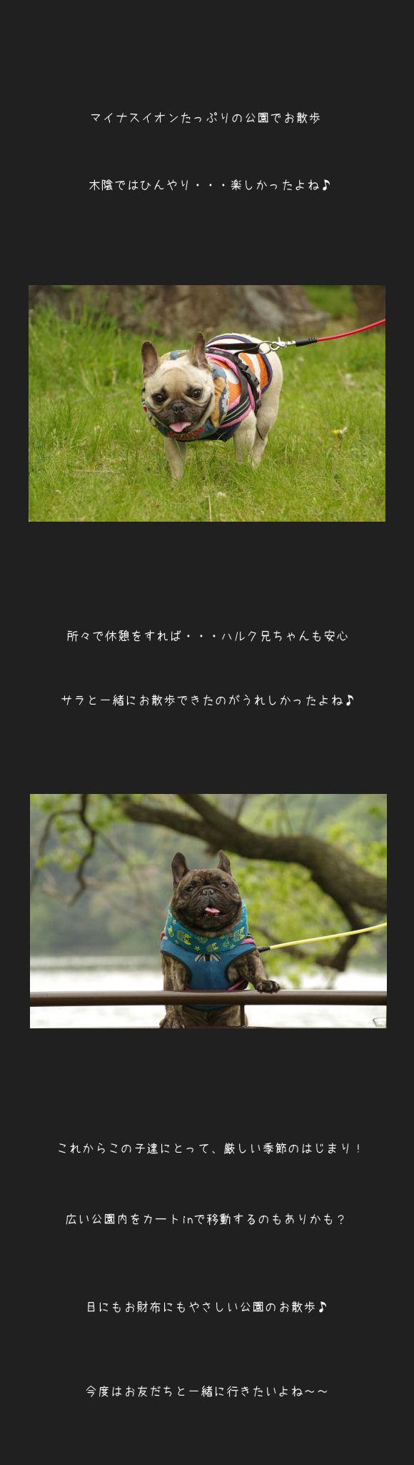 山田池公園D