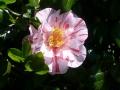 桜だけでなく2