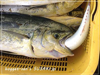 20140514魚市場5