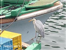 20140514魚市場8