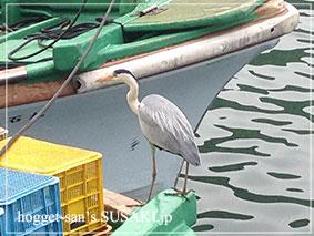20140514魚市場9