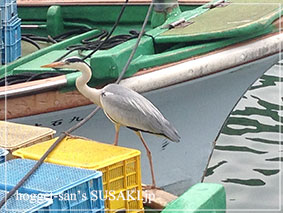20140514魚市場11