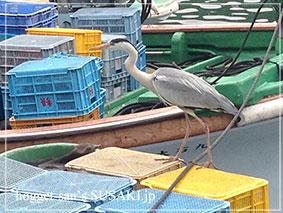 20140514魚市場12