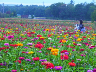 山中湖 花の都公園20140916