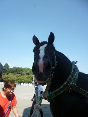 愛馬の日20140923