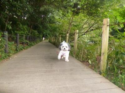 石神井公園20140924