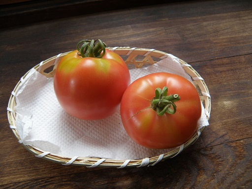 tomato1051.jpg