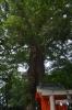 一番楠と楠木神社