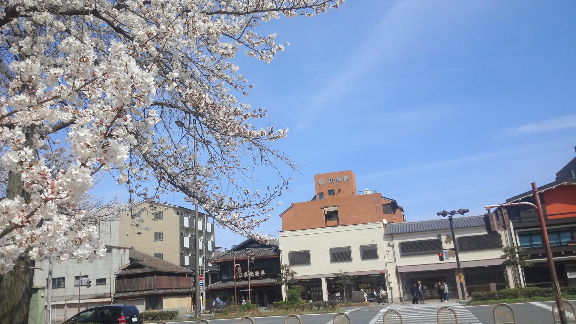 東本願寺前の桜 法藏館の看板が・・・