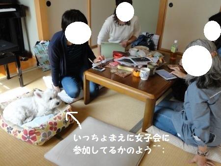 DSC04963_convert_201410021837041.jpg
