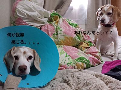 20140704_1.jpg