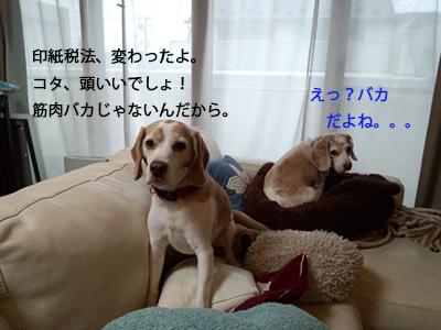 IMG_20140418_153412680_1.jpg