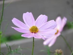 2014-08-23 清里・蓼科 112