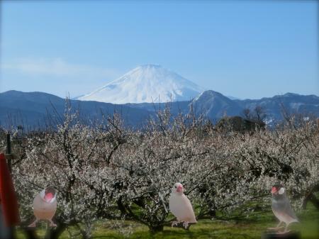 富士と梅1
